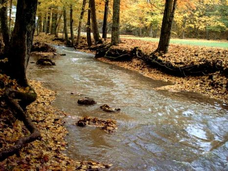 The Creek in Autumn 2 by ravendruid1