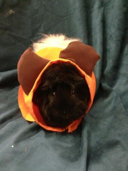 Ewok Guinea Pig Costume Cosplay by mch2020moehunt