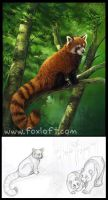 Red Panda Box Back by Foxfeather248