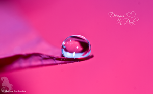 Dreams In Pink by Gryphonia