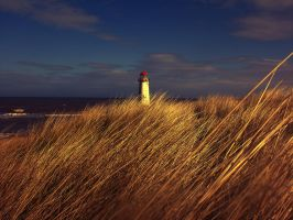 Golden Talacre by friartuck40