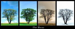 Four seasons of loneliness by Ro-nature