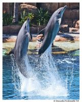 Leaping Dolphins by TVD-Photography