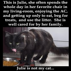 Julie not my cat by vick330