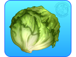 Lettuce by IsomaraIndex