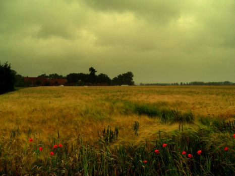 Poppies and a Corn Field by Cluisanna