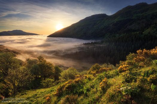 Mist in the Valley by MaximeCourty