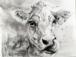Cow drawing in charcoal Study #2 by Lineke-Lijn
