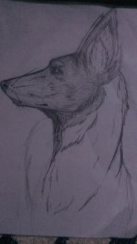 Dog Sketch by MusicOverload
