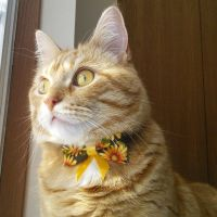 Little miss Sunshine by lucytherescuedcat