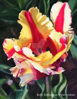 Blooming Parrot Tulip by KellyEddington