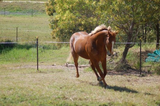 Horse stock - tb canter 3 by Chunga-Stock