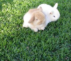 Two Bunnies by jellybean400