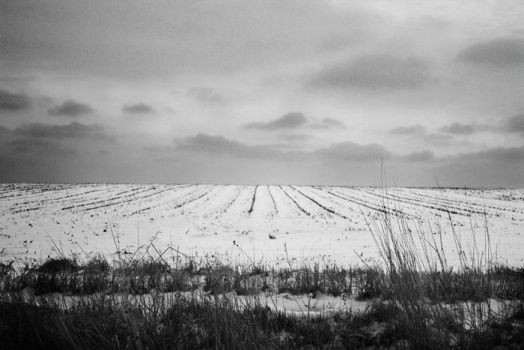 SnowField BW by penguinpockets