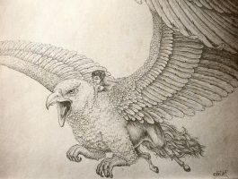 Harry and Hippogriff by ansent