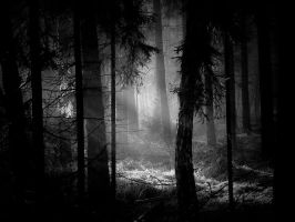 dark clearing by emjot72