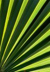 Palm-lines by ANOZER