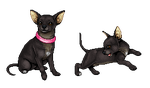 Ody's chihuahua by ImaginaryKarin