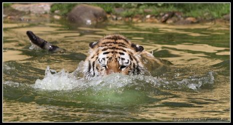 Going for the dive by AF--Photography
