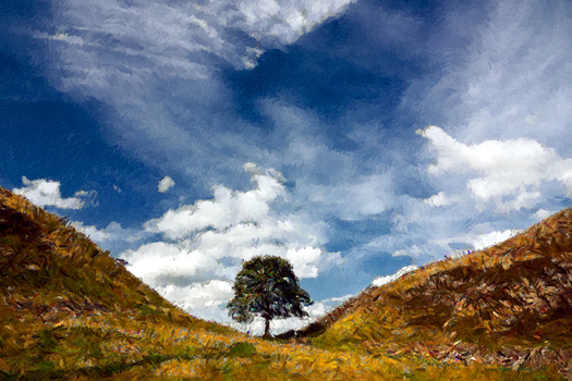 Sycamore Gap by Nigel-Hirst