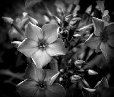 Celestial, Black and White by beeayoutifullove