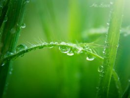 Rain drops by JoaoPhotography