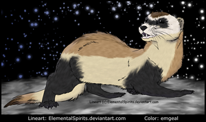 Black Footed Ferret by emgeal