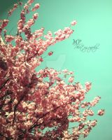 -149- The perfect blossom by MiriamPeuser