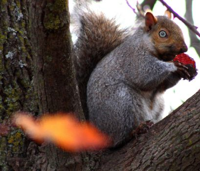Zombie Squirrel eating Brains by KeswickPinhead
