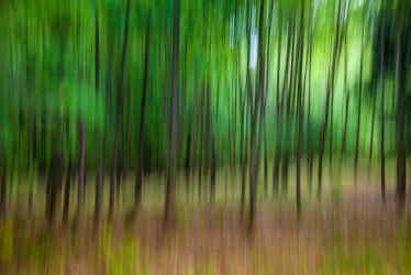 Blurry Forrest by PiCue