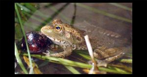 The Frog2 by bmadran