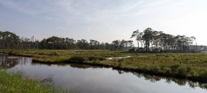 Chincoteague Landscape by lupiniastudios