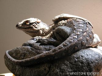 Rock dragon from tail end by Reptangle