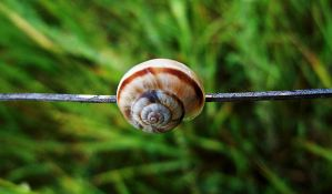 Snail.. by VasiDgallery