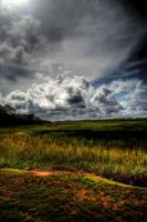 Lowcountry I by NullCoding