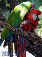 Macaws - l by BelievePhotography