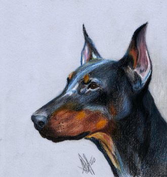 Doberman by lonely-wolf-22