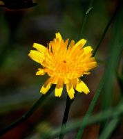 Just a Weed by Tailgun2009