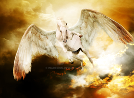 Pegasus by Inadesign
