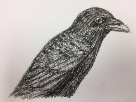 Crow Practice [1/2] by Panolli