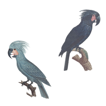 Variety of Parrots 2 PNG by chaseandlinda