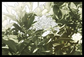 Shrubbery Blossoms by Frostola