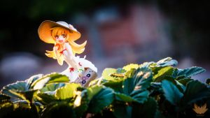 Sunny Sweet by Noble-beast-photo