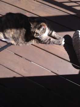 my cat on the deck by silverhedgehog2009