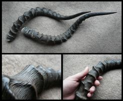 Impala Horns by CabinetCuriosities