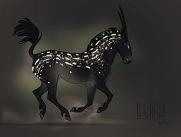 X2325 Indira by NorthEast-Stables