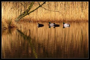 Golden Pond... by MichiLauke
