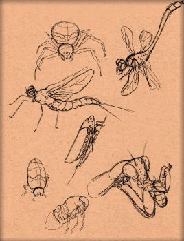 Insect Study 5 by LordMaru4U