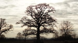 Olden Trees by VampireBoodle