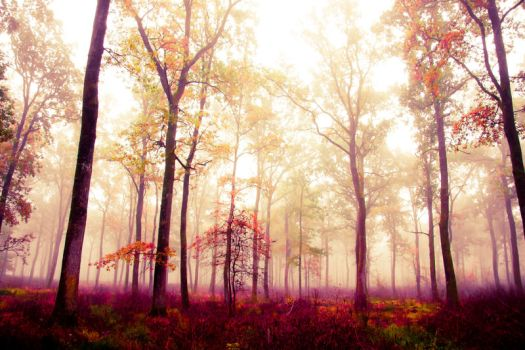 Forest in Fog 2 by 6v4MP1r36